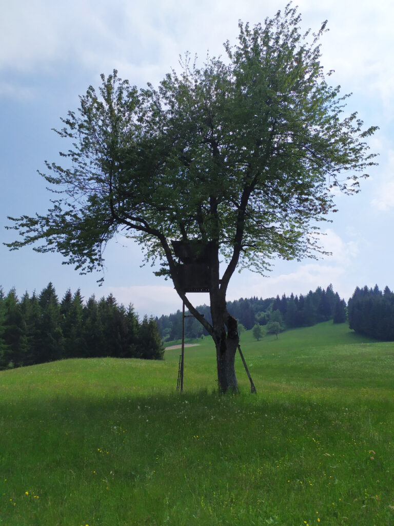 casa sull'albero tonezza
