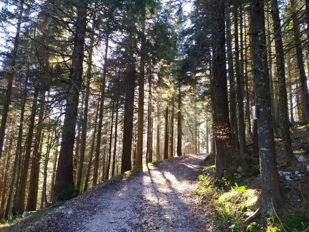 forte campolongo escursioni rotzo