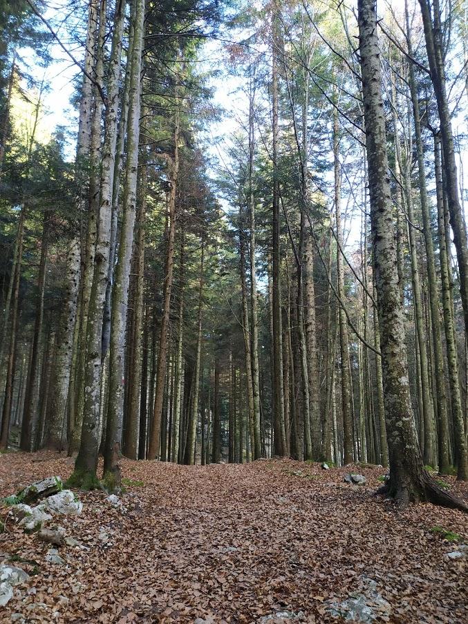 sentiero per la mina di scalambron monte zebio