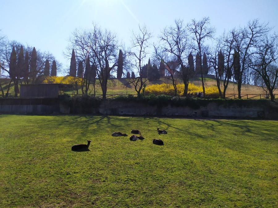 daini parco giardino sigurtà