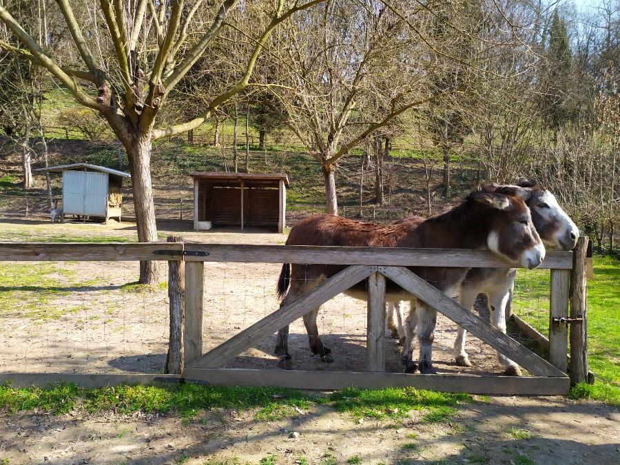 fattoria didattica parco giardino sigurtà