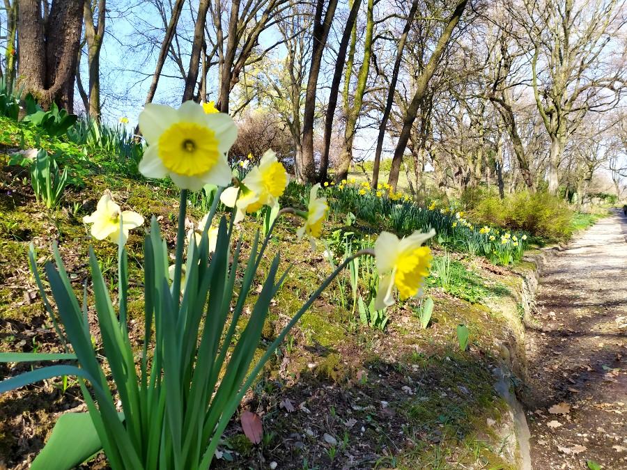 fioritura parco sigurtà