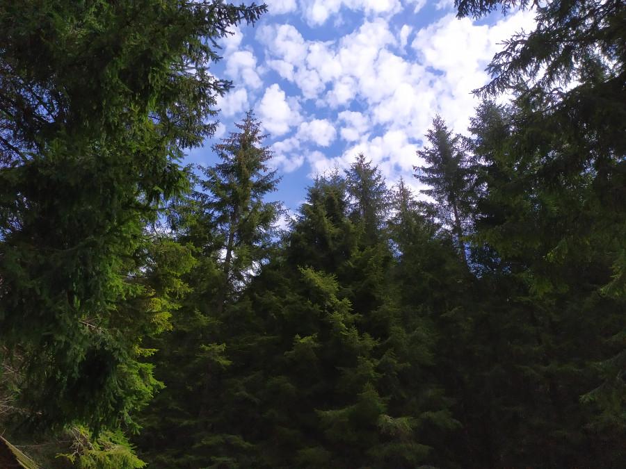 boschi della val di nos gallio