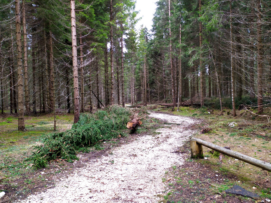 percorso didattico forestale val di nos