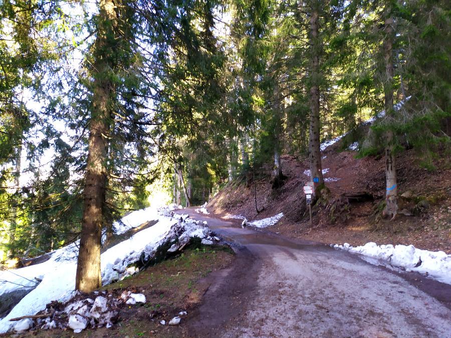 sentiero per malga fossetta