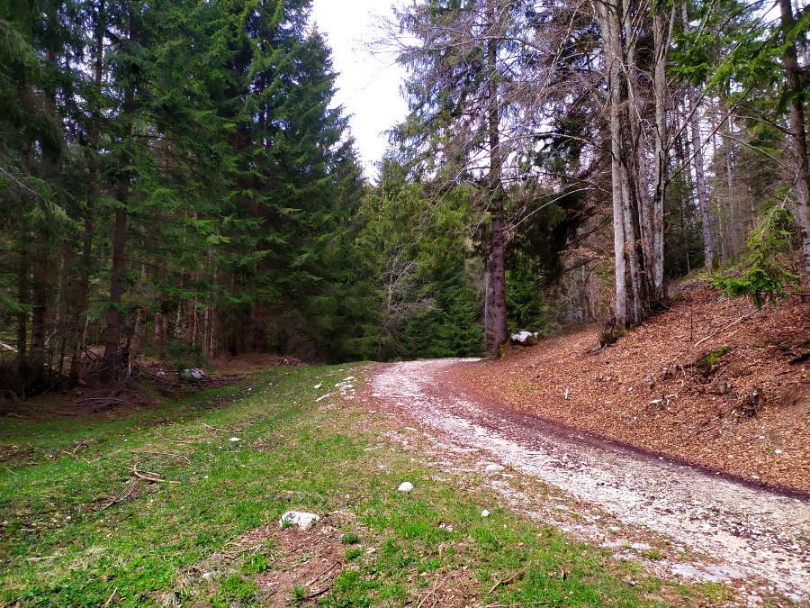 val di nos gallio percorso didattico forestale