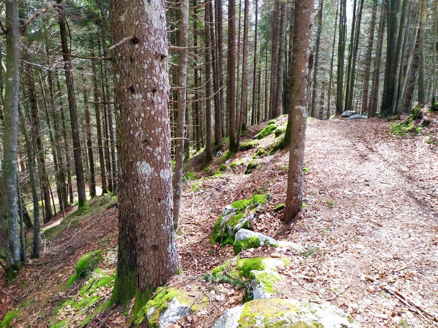 val di nos percorso didattico forestale