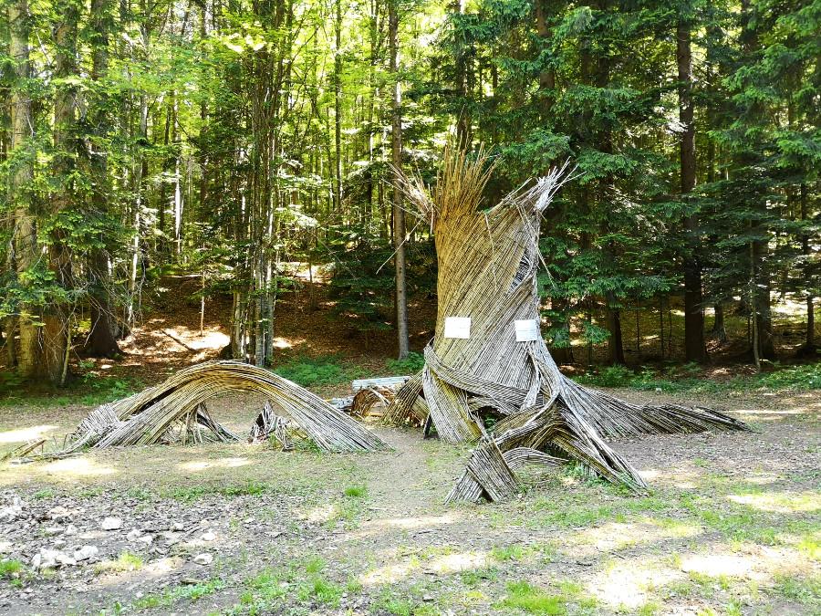 percorso il respiro degli alberi lavarone