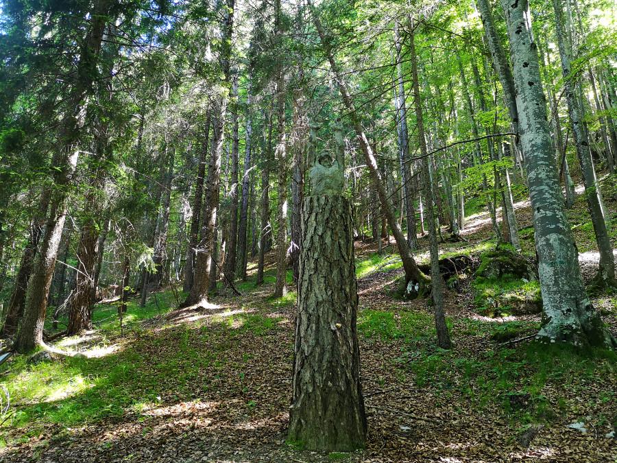 respiro degli alberi lavarone indicazioni