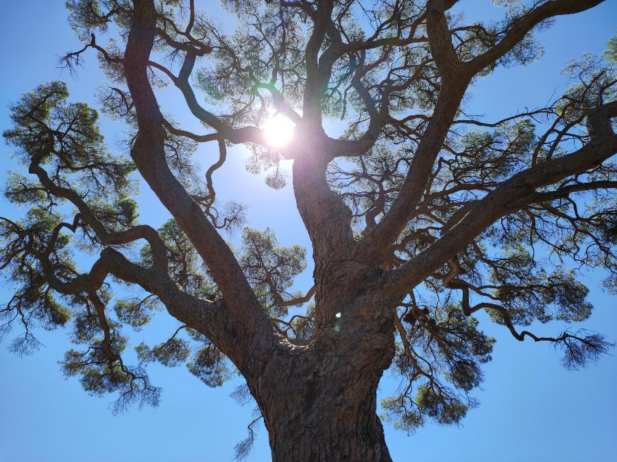 pino di monserrato porto azzurro elba