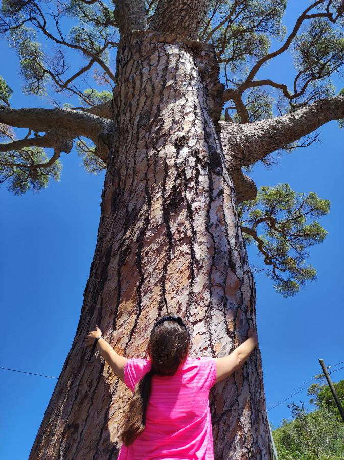 pino di monserrato