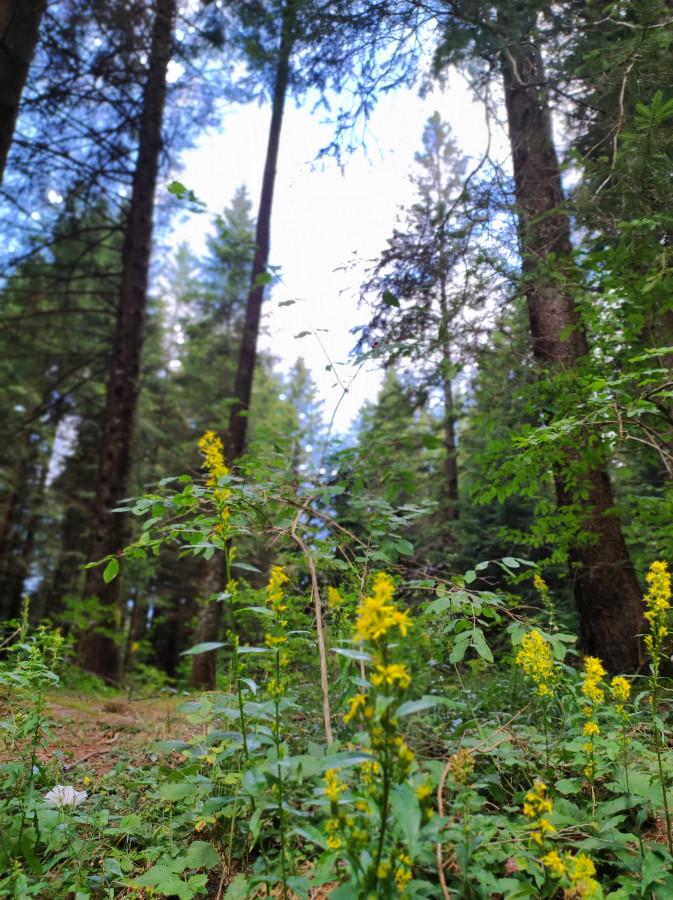 bosco luserna