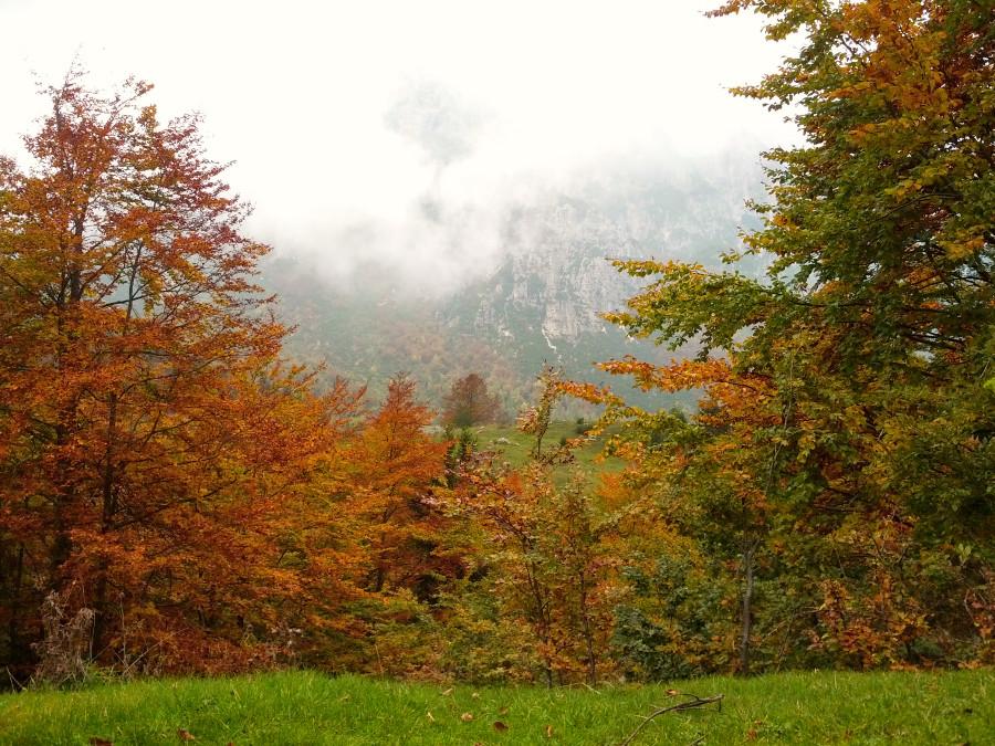 riugio campogrosso foliage autunno