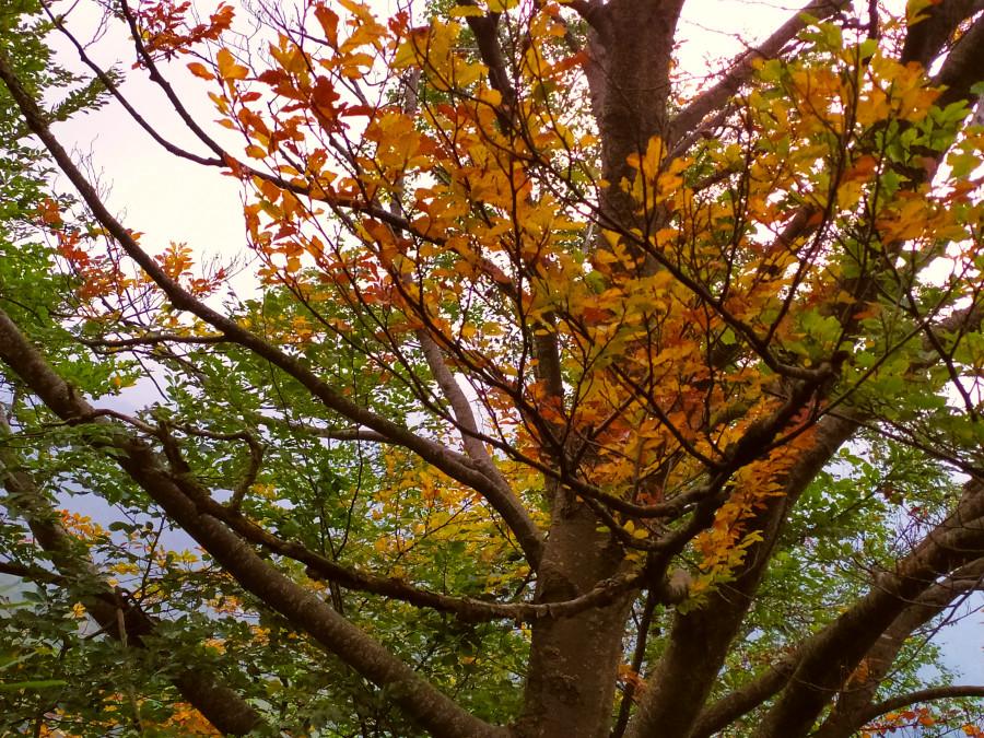 sentiero dei grandi alberi foliage autunno