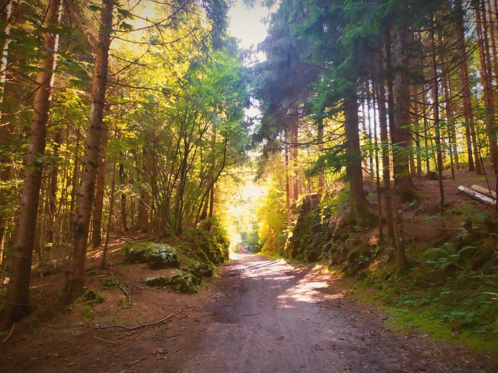 strada del vecchio trenino asiago autunno